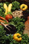 veg diet 1